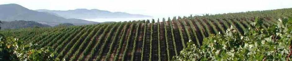 Выдержка переливки криостабилизация, Блог Игоря Заики о виноградарстве и авторском виноделии 986