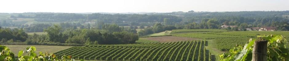 Горечь в вине, Блог Игоря Заики о виноградарстве и авторском виноделии 197