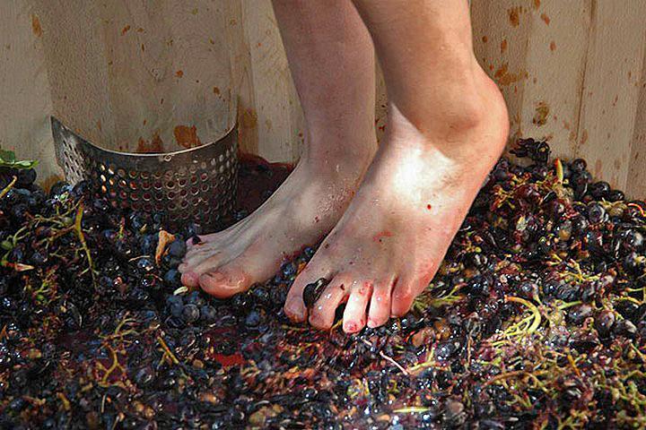 Давление винограда