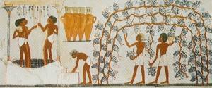 Вино в Египте