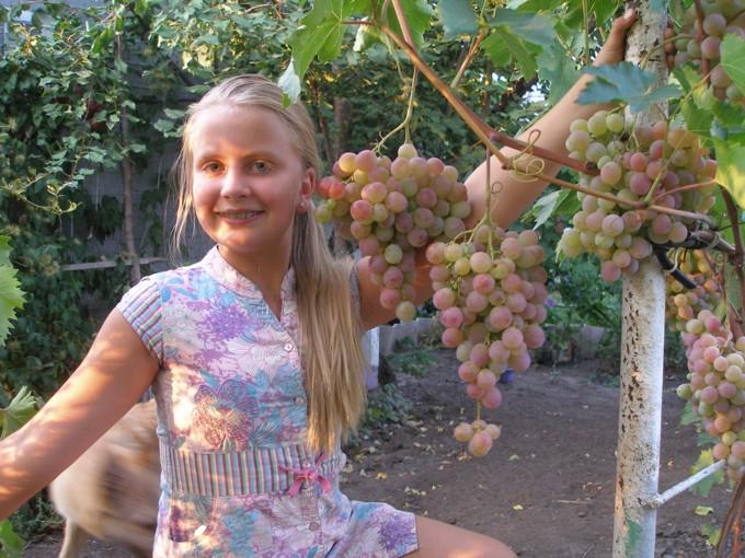 Вероника и виноград Фламинго