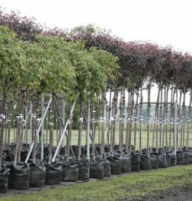 Вкус и аромат природы в саженцах плодовых деревьев от компании Greensad