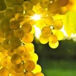 Конкурс виноград