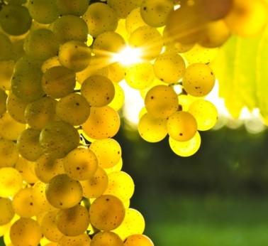 Скоро! Белые вина 2013!