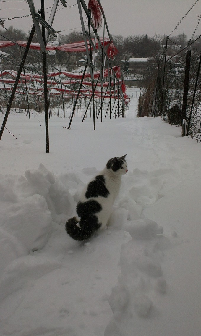 Рислинг зимой