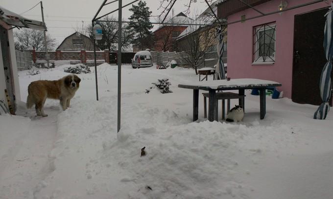 Зверьё зимой