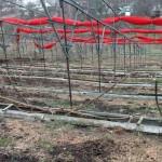 Перестройка виноградника