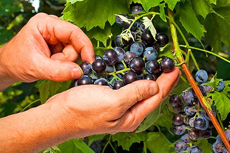 Влагомер для домашнего виноделия: вещь удобная и незаменимая