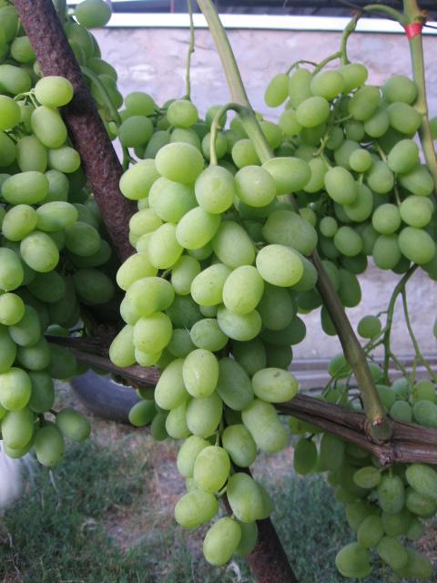 новый подарок запорожью гроздь