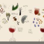 Ароматы вина в зависимости от возраста